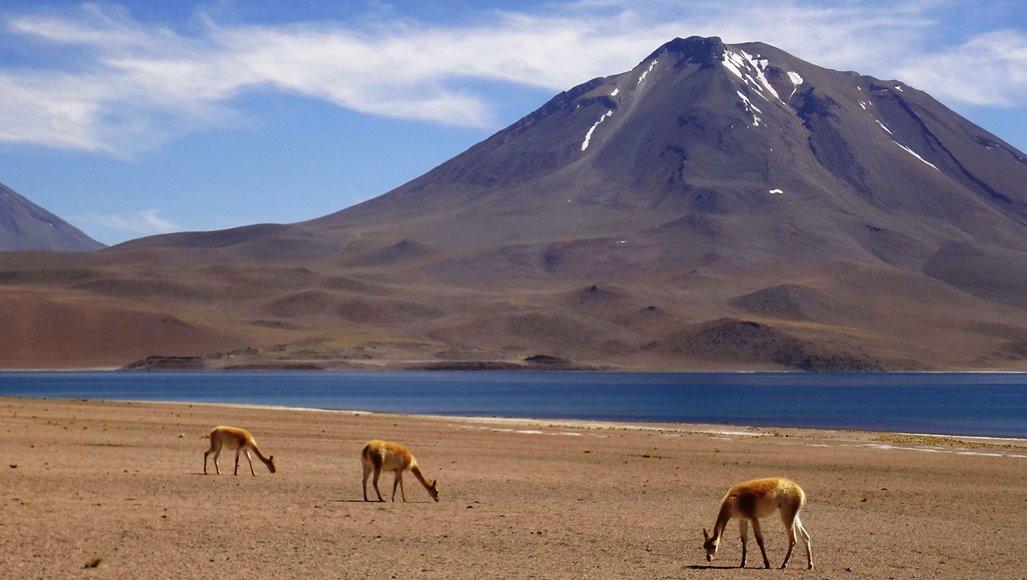 O que fazer em San Pedro de Atacama - Lagunas Altiplânicas