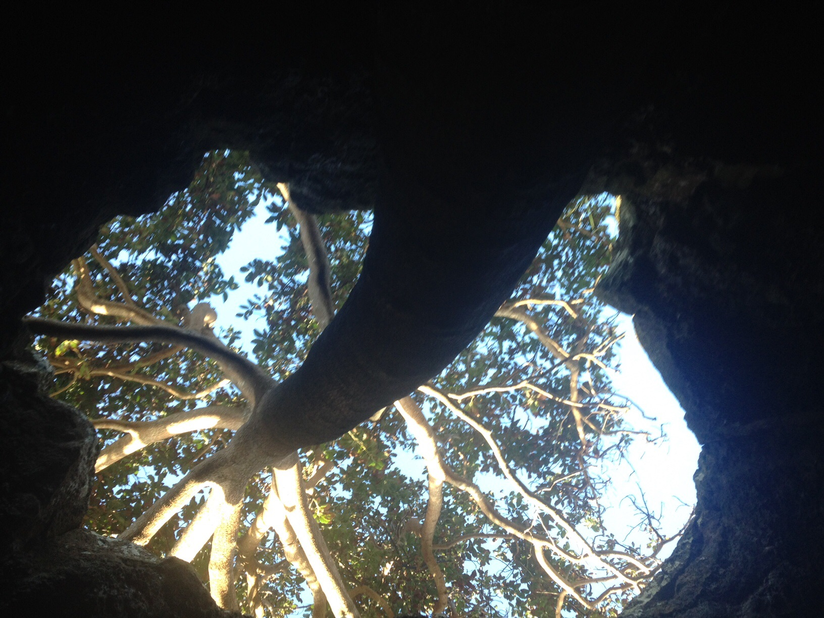 A árvore linda dentro da caverna