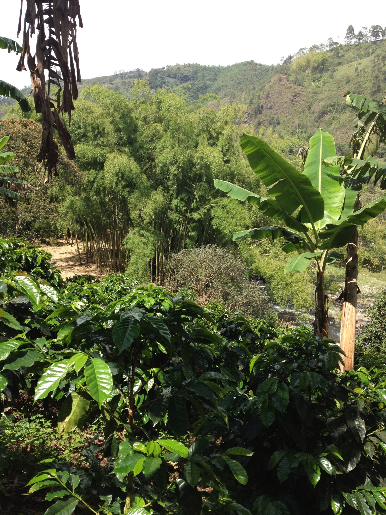 Conhecendo uma fazenda de café na Colômbia