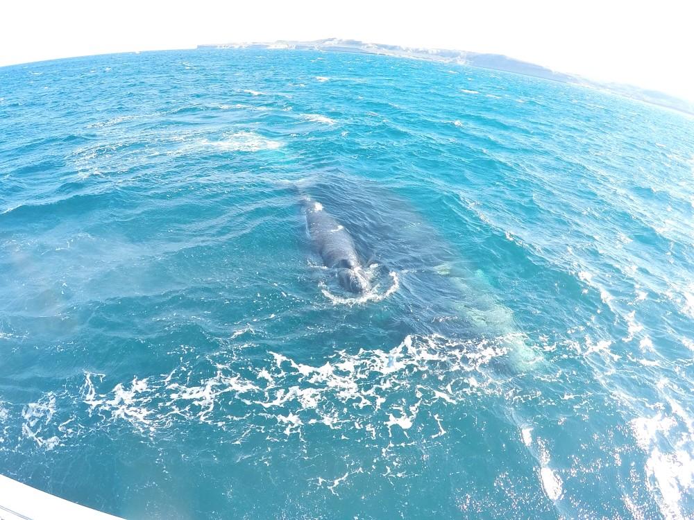 Quando eu falo que as baleias estão perto, elas estão perto DE VERDADE