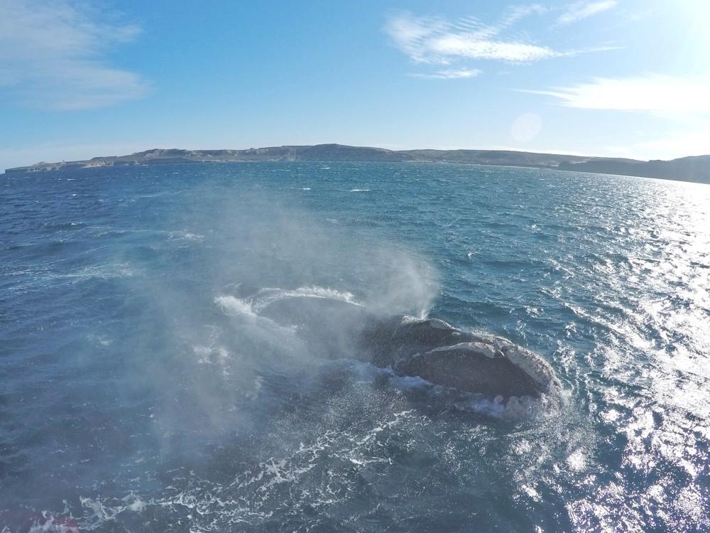 Península Valdés, Puerto Madryn e as baleias